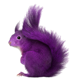 Purple-Squirrel